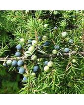 Juniper Breeze Fragrant Oil