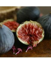 Moroccan Fig Fragrant Oil