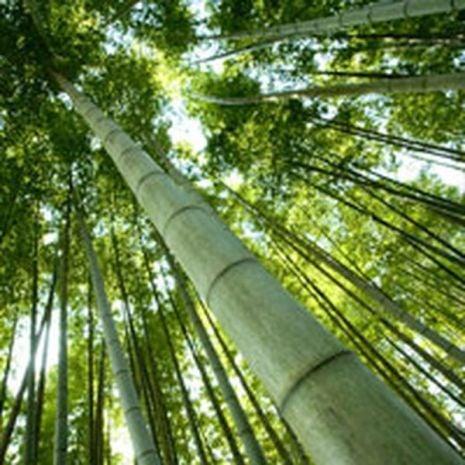 Fresh Bamboo Fragrant Oil