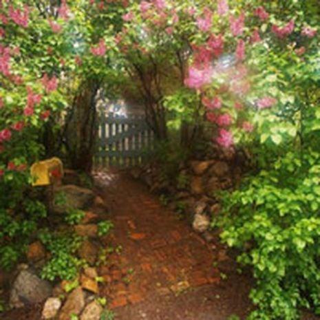 Garden of Eden Fragrant Oil