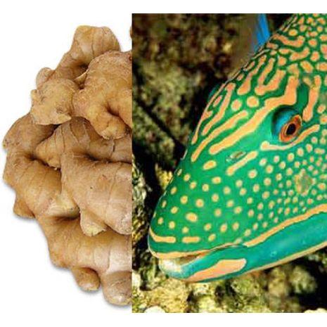 Ginger Fish Fragrant Oil