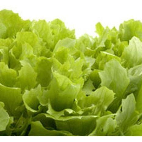 Lettuce Fragrant Oil