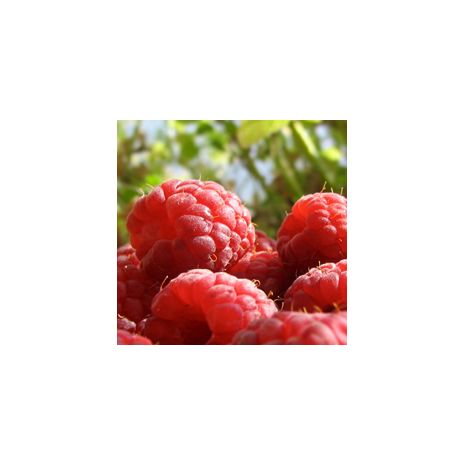 Raspberry Flavor Lip Balm